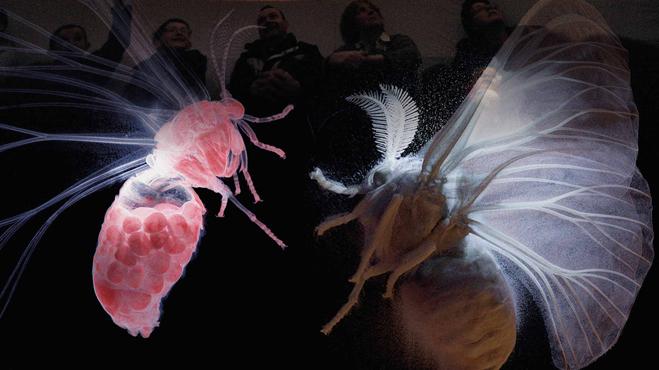 The Secret World Of Moths