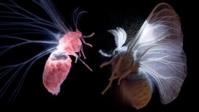 Pop-Up Planetarium: The Secret World of Moths