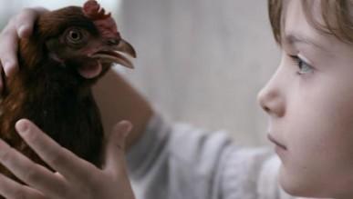 Case Study: The Chicken